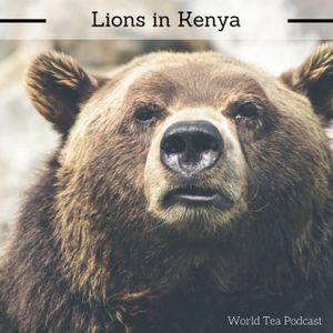 Lions in Kenya