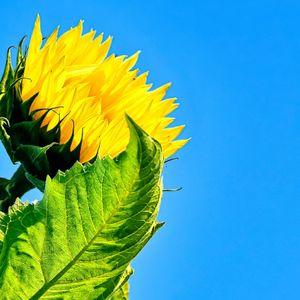 Sweet Summer Sunshine