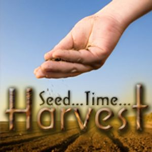 Seed Time and Harvest. Math 13:31,32