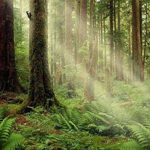Spring Forest 0410
