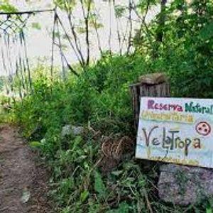 Conflictos en Velatropa