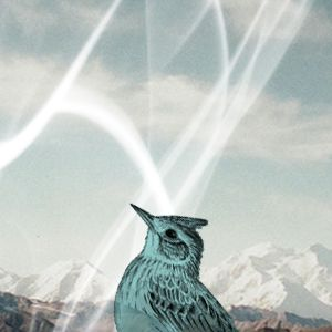Oli_N - Skylark on a string 2012