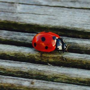 The ladybug's session