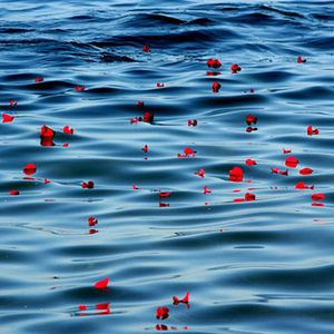 Salão mar de rosas