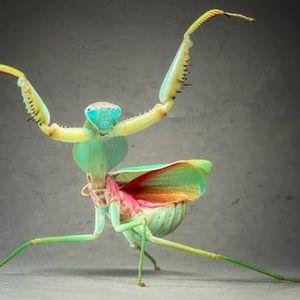Return Of The Mantis