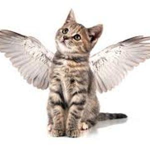 V Angel gives a Sunday Warning  (fürchte dich nicht)