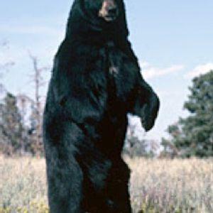 RUPERTT-RESPECT TO THE GERMAN BEAR 30TH BIRTHDAY RAVE