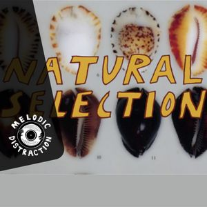 Natural Selection with Sticky Dub (October '19)