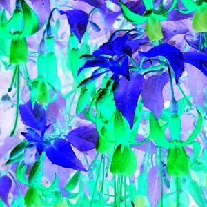 The Lloydbrary - VIsit 226 - Sonic Bloom