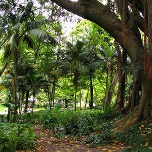 Master Margherita - Live - Ambient Garden 2011