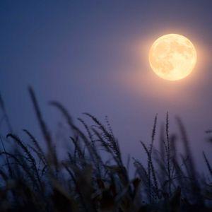 Ron Gabriel - A passage to the Celestial Autumn Noctis