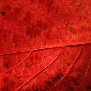 Darkblue - Autumn Red Session