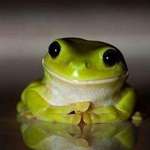 Indie Frog Vol.2