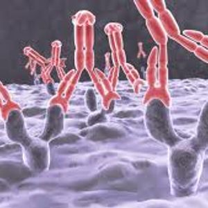Antikörper - The Beginning