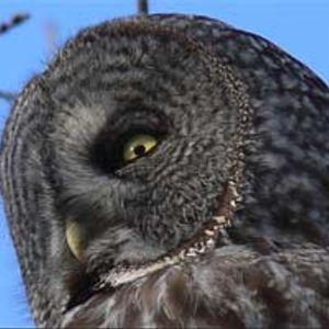 Jay Synflood - owls 10/2005