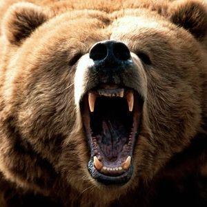 Kyle Robertson's -Fury Bear' Mix