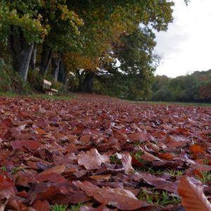 Enter Autumn session