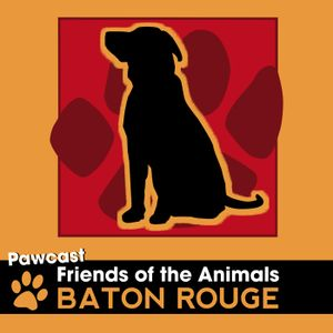 Pawcast 059: Love Affair with Katie and Gentle Ginger PLUS a Pawcast FIRST
