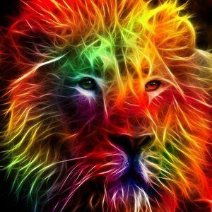 de leeuwenkuil donderdag 6 februari 2014 op fresh fm aruba