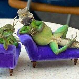 Lizard Lounge - March 2011