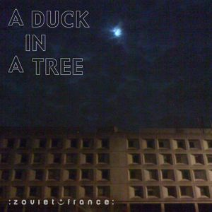 A Duck in a Tree 2012-11-03 | Opposite the Rainbow Room