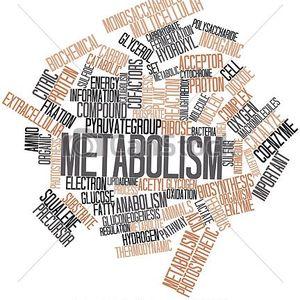 Metabolysm mixLive 0.1 Unikod mp3