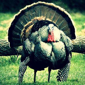 22 November 2017 Turkey Day Yay