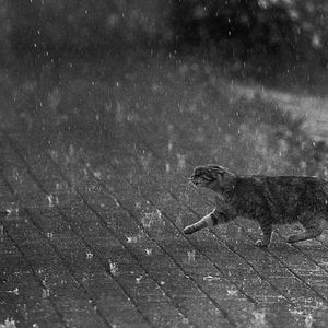 The Rain Remains The Same (RAINY MIXTAPE)