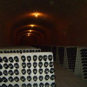 Paseos culturales: de vinos y viñedos, Querétaro