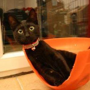 Berceuse pour chats
