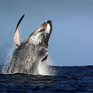 Whaling J - good vibrations