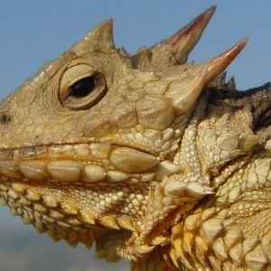 Giant Lizards shall soon rule the Earth - October 4th, 2011