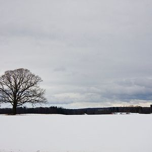 Winter Lamantin Mix (2012)