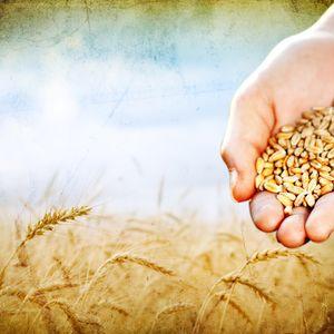 """""""De oogst is rijp! Bent u al een maaier?"""" - Voorganger Roy Manikus 22-9-2013"""