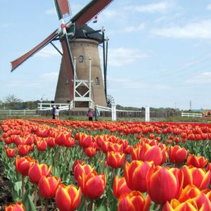 Dutch Flavors