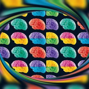 Center of the Brain