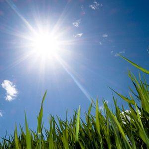 Sunny Dayz