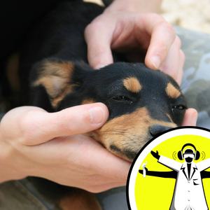 Are Dogs Ticklish?
