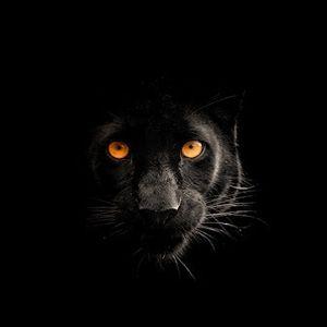 Nightcrawler (by Leon Taste)