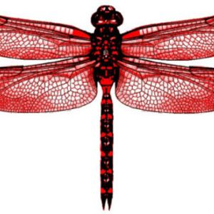 Beauty In The Eye of The Red Dragonfly Mix
