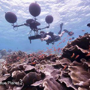 Underwater Sound in Blue Planet II   Prof Steve Simpson