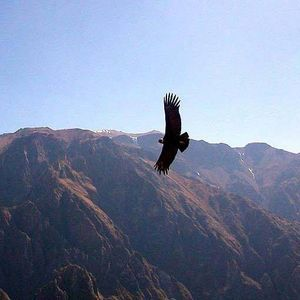Andean Condor - Time Travel Tour (all-exclusive)