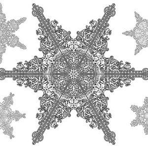Translucid - Winter