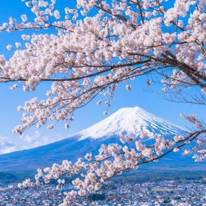 Spring in Japan, 11th April 2018