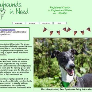 The Spanish Galgos - Greyhounds in need