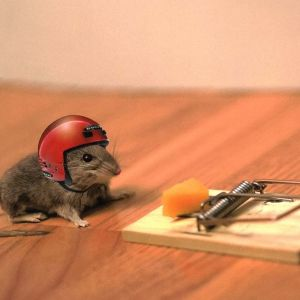 """""""Une souris dans Une boîte"""""""