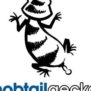 Knobtail Geckos Galore Part 2!