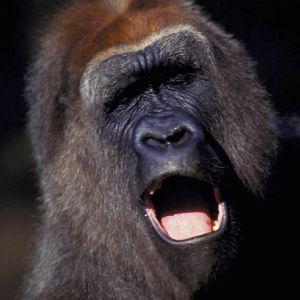 Drunken Monkeyz aka AK47 & Destroy2k - Ramba Zamba im Affenstall