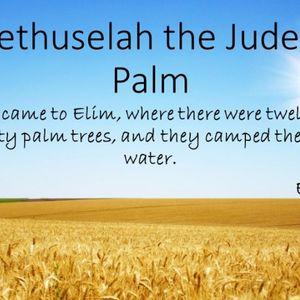 Methuselah The Judean Palm