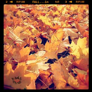 BamaLoveSoul Presents – FALL…in
